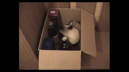 Котка не си дава алкохола.