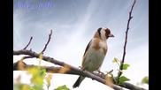 Павел Сираков - Кацнал бръмбар на трънка
