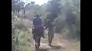 питбула от габрово на кон