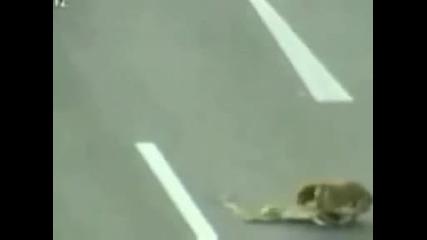 Изумителна История ! Бездомно куче стана световен герой благодарение на Youtube