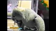 Говорещ Папагал - Смях