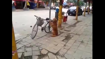 Куче пази колелото на стопанина си!!!
