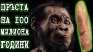 Човешкият пръст датиран от преди 100 милиона години!