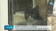 Започва преброяване на бездомните котки в София