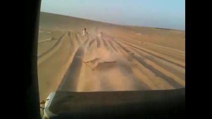 Сърф в Пустинята