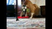 Коте изчезва с финес 5 - Cat gone - Thriller Cat 5