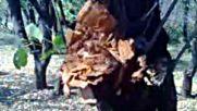 Orman Kacakcilari Yeniden Suc Islemisler Daga Police Emen Yakaladi Gibi Ucurdu Direk Hapisaneye 1 Te