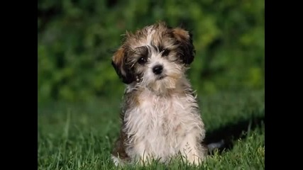 Искам куче детска песничка