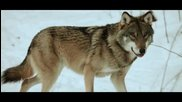 Sonata Arctica - The Wolves Die Young • Official Video 2o14