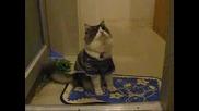Котка С Пуловер - Смешна Гледка