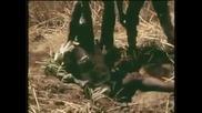 как ловят гигантски питони в Африка