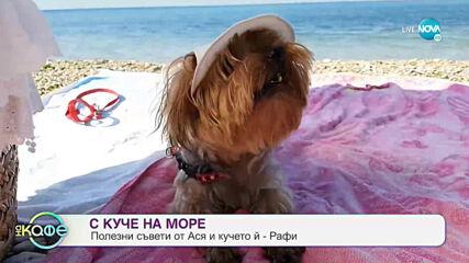 """Полезни съвети за хората които отива с куче на море - """"На кафе"""" (31.07.2020)"""