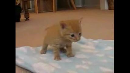 Малко котенце учещо се да върви