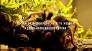 Интересни факти за Тарантулите