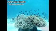Коралови градини! Нещо невероятно!