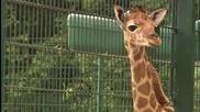 Бебета в зоопарка (Zoo Juniors) S03E08 ( Абонирайте се за канала ни )