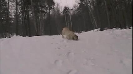 Кучета се пързалят