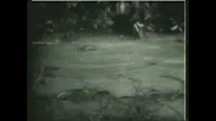 Тигър Срещу Крокодил