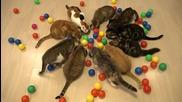 10 котки играят в басейн пълен с шарени топчета