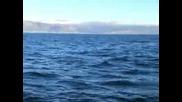 Акули И Хардкор