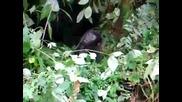 Бебе горила се опитва да подражава на големите
