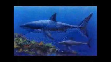 The Megalodon - Най - Голямата Акула - Док.филмче !