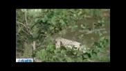Бели тигърчета бозаят от кучка !