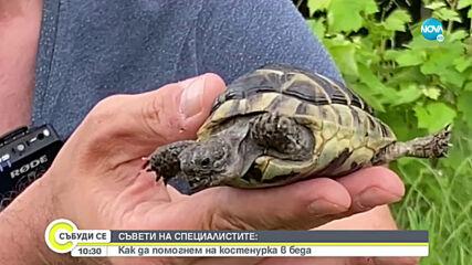 Как да помогнем на костенурка в беда?