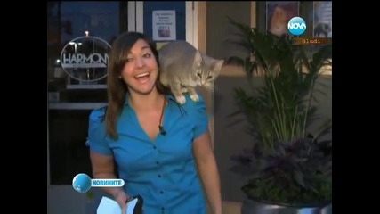Котка изненада в гръб репортерка
