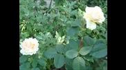 Era - The Mass & Roses