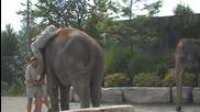 неудачна езда на слон /мого смях/