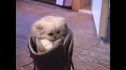 Сладко коте в удобна къща
