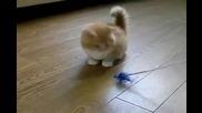 Сладко малко котенце