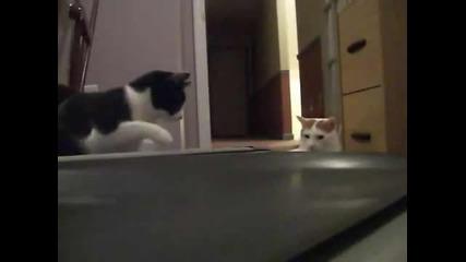 Котка се опитва да спре пътека
