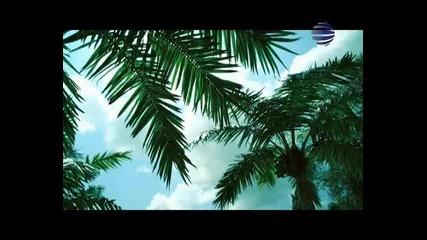 Cvetelina Qneva - Za Kontakti