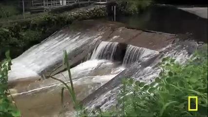 Огромен китайски гущер