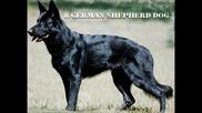 Топ 18 на Кучета Пазачи