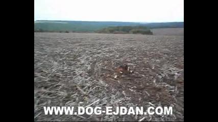 Kopoy 2 www.dog - ejdan.com