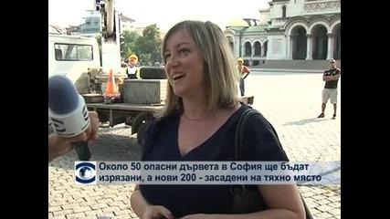 Около 50 опасни дървета ще бдат отрязани в София, общината ще засади 200 нови