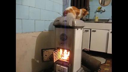 Печена котка на кюмбе