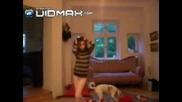 Момиче Танцива а Кучето и Прави Порно