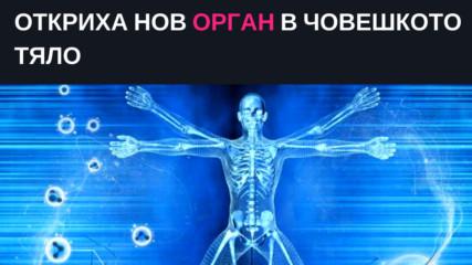 Oткриха нов орган в човешкото тяло