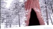 Vivaldi - Four Seasons - Winter