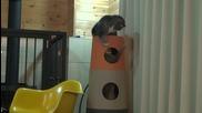 Котешка кула, Мару и Хана