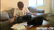 Cat does taxes (sheeba Ep. 2)