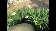 Пролет в нашия двор