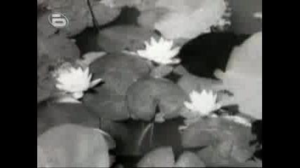 България в кино-лента (1929 -1944) Част 2