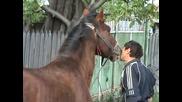 Кон раздава целувки