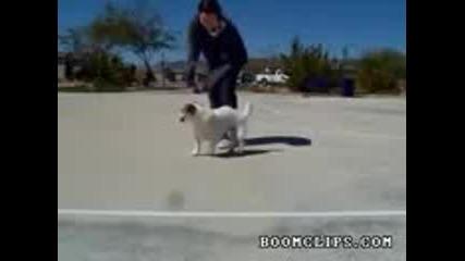 Какво могат кучетата