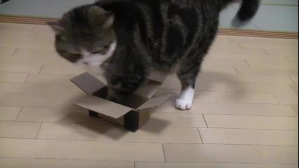 Тая котка се мисли за кокошка (смях)